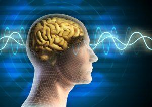 Gehirn mit stilisierter Lernkurve
