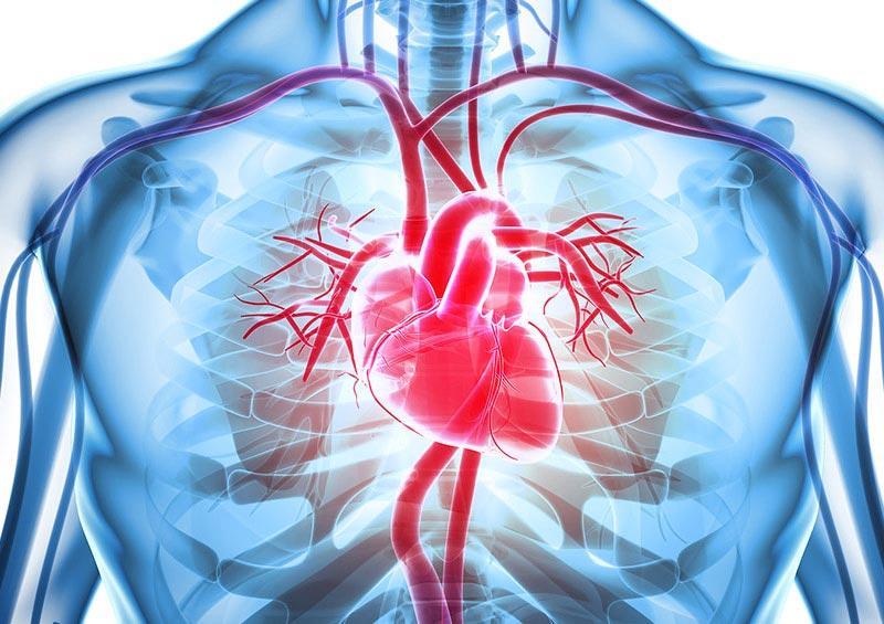 Symbolfoto für Herz und Kreislauf