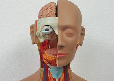 Ausschnitt eines Körpermodells, Kopf