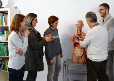Anatomischer Unterricht am Modell